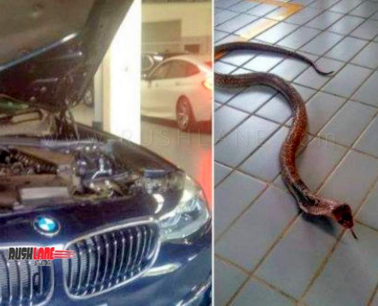 BMW 3 Series owner hits a snake on road - Here is what