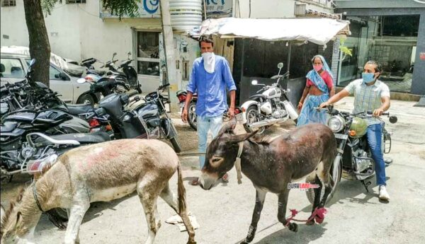 Jawa owner donkeys dealer